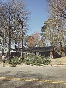 Tree Removal Virgnia Beach, Chesapeake, Norfolk