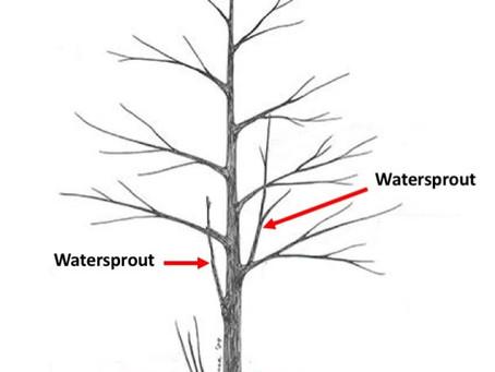 Preparing your trees for storm season.