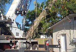 Emergency Tree service Virginia Beach