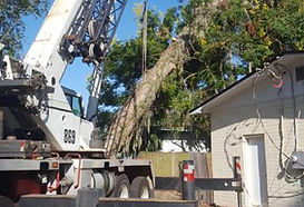 Emergency Tree Removal Virginia Beach