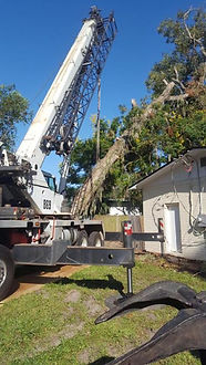 Emergency Tree Removal Virgnia Beach, Chesapeake, Norfolk
