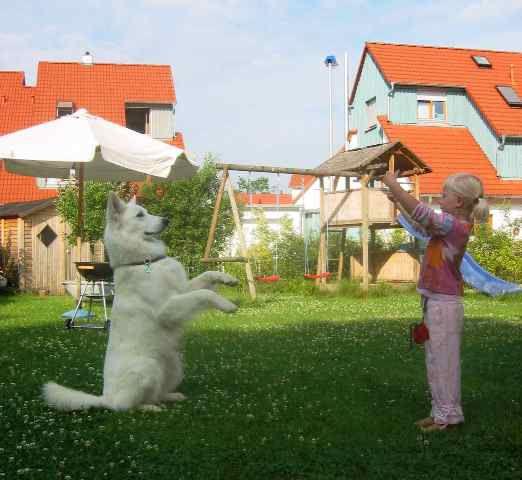 weiße Schäferhunde mit Kind