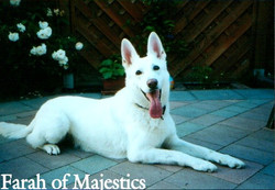 Farah of Majestics