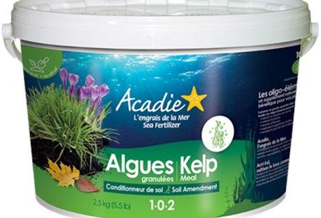 Algues marines granulées 2.5Kg
