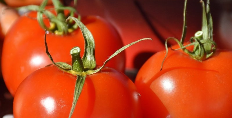 Tomate rouge 'Célébrité' 6 pack.