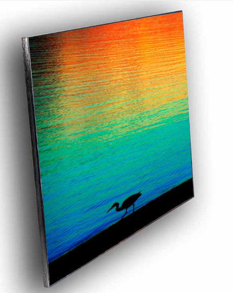 Rainbow Sunset Bird