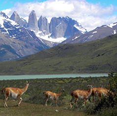 Torres del Paine National Park @Chilean Patagonia