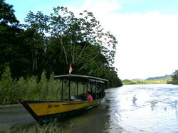 Amazon Forest, Peru