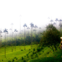 Cocora Valley @ Colombia