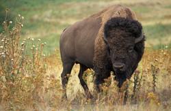 Buffalo Rock State Park