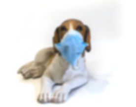 Dog with mask.Faux resin model of Beagle