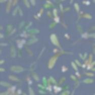 sold dusky blue mistletoe fabric.jpg