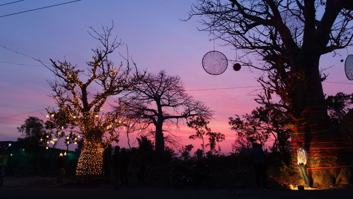 Baobab Decorations