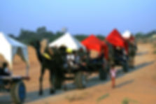 Camel Safari at Pushkar Mela