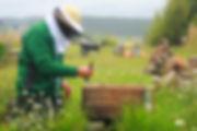 'beewax wraps' 'beeswax wrap' 'honey wax wraps' 'beekeeper NZ'