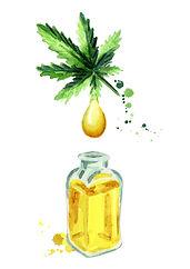 Natural Hemp oil.Hand drawn watercolor.j
