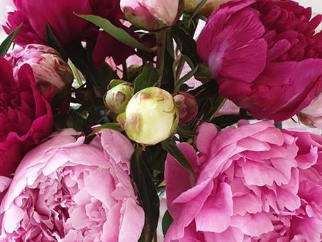 Spirit und die Jenseitskontakte - Ein Blumengruß