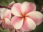 tropical-2102049_1280_edited.jpg