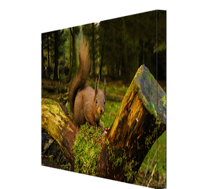 Red Squrrel #2 CANVAS.JPG
