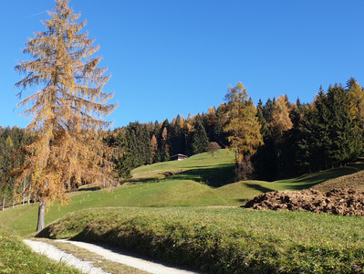 Tre passeggiate per scoprire il foliage in Alta Val di Non a Rumo