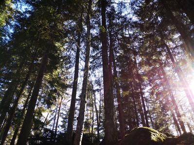Bagno di Foresta in Val di Non