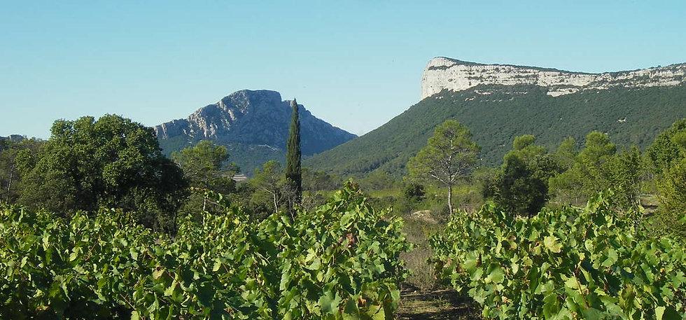 Pic-Saint-Loup-vigne-hortus-oenotourisme