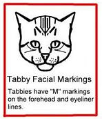 images_tabby_types_900x642_edited.jpg