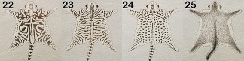 patrones-tabby3.jpg