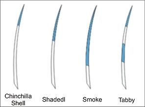 Shaded, shell, smoke & tabby.jpg