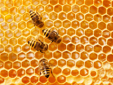 Employment Services: Worker Bees