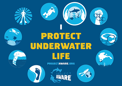 Tip-4-Protect-Underwater-Life.png