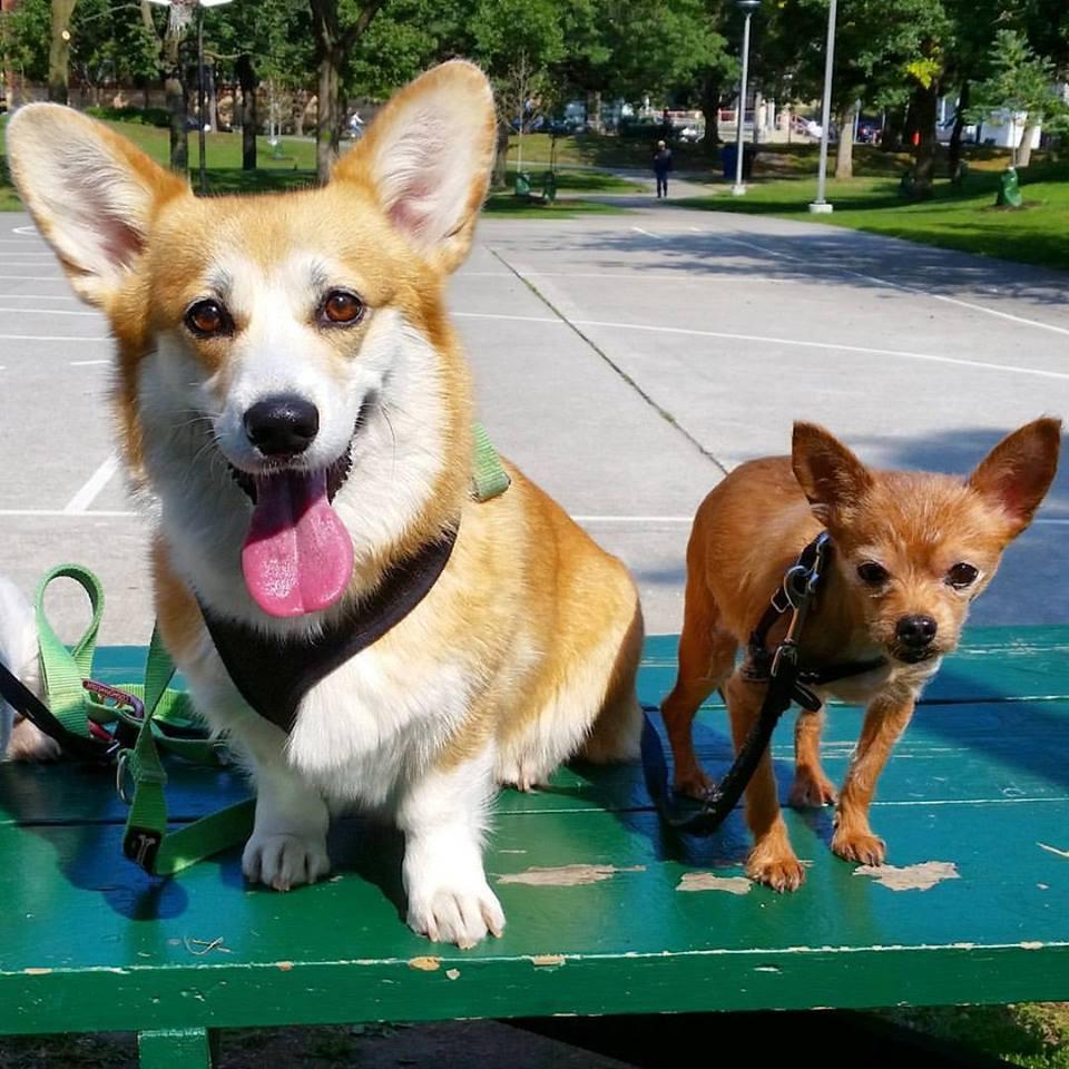 Walking Pet in Canada