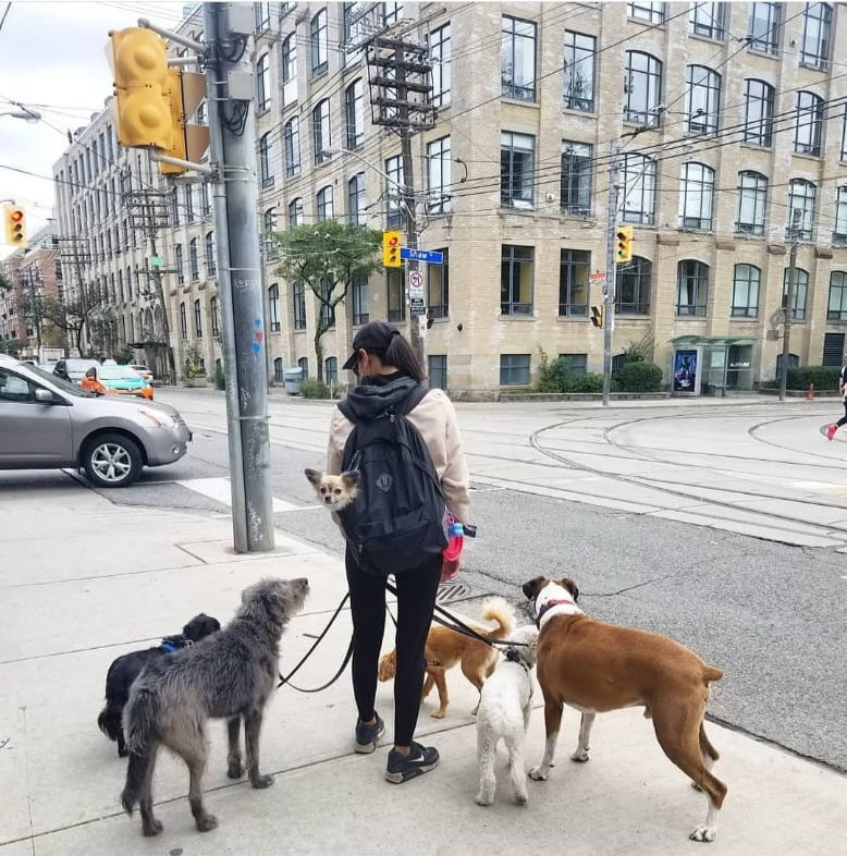 Reliable dog walker Toronto