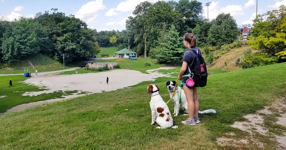Hiring a Dog Walking Business