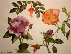 rosas-mudada
