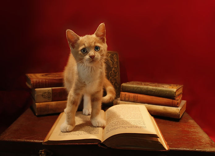 gatto libro.jpg