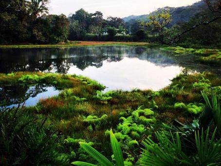 Birding Spot -Ammo Ponds-