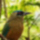 Birding Tours Birdwatching Tours Panama