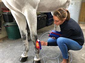 luminothérapie equine, bien être du cheval, balnéothérapie équine