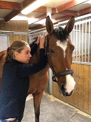 balneothérapie équine, ostheopatie, massage équin