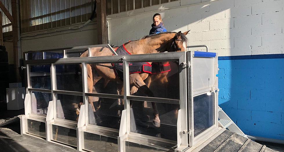 Aquatrainer Balnéo Sport Horses