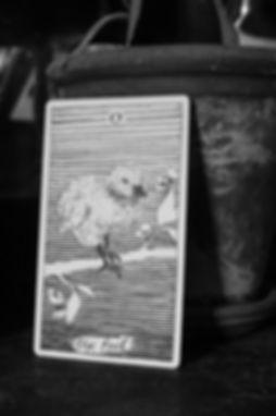 The Poet's Tarot - Interior 2x2-08.jpg