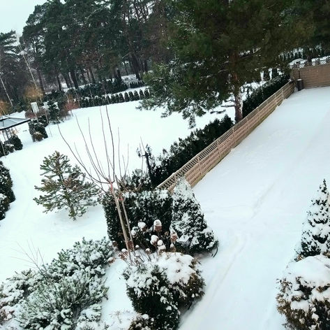 organizacja golden palace zima snieg