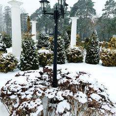 golden palace zima
