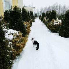 sala weselna koty grodzisk mazowiecki