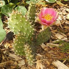 obrączki ślubne kaktus