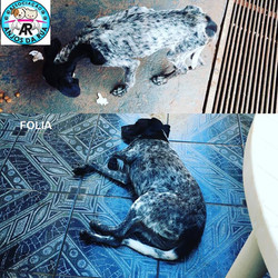 FOLIA - Copia