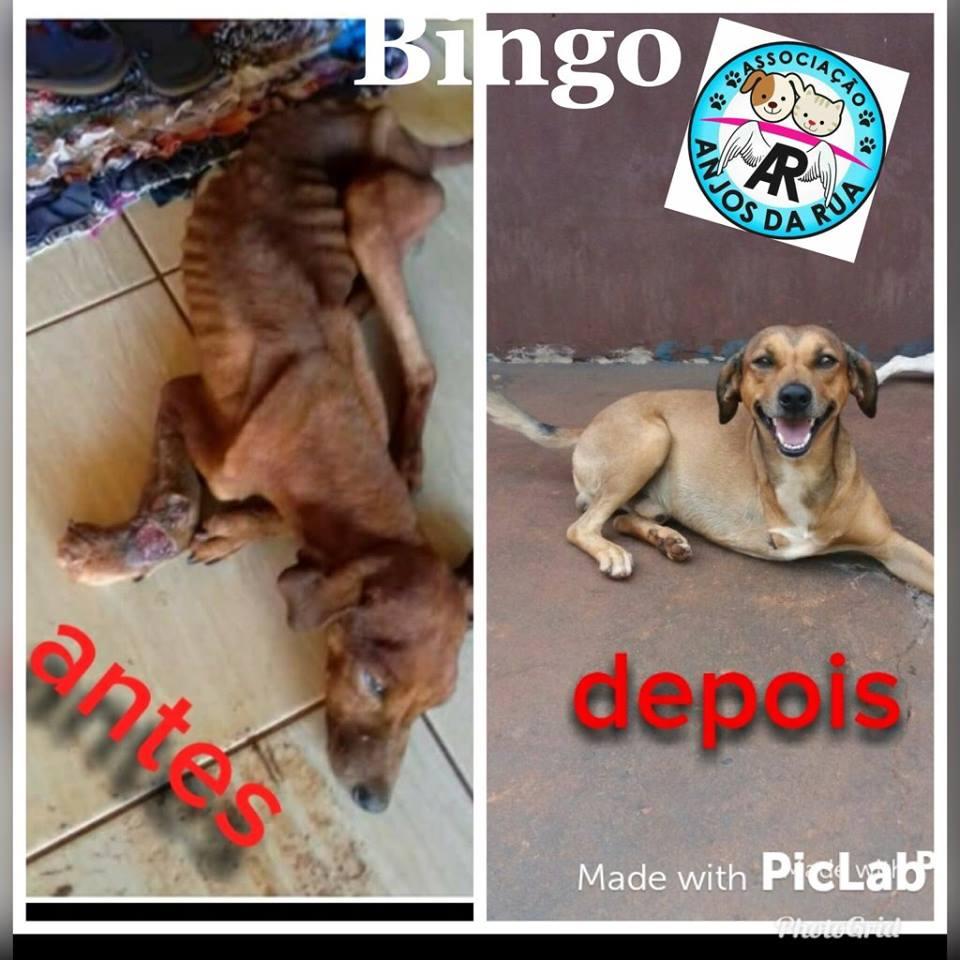 BINGO - Copia