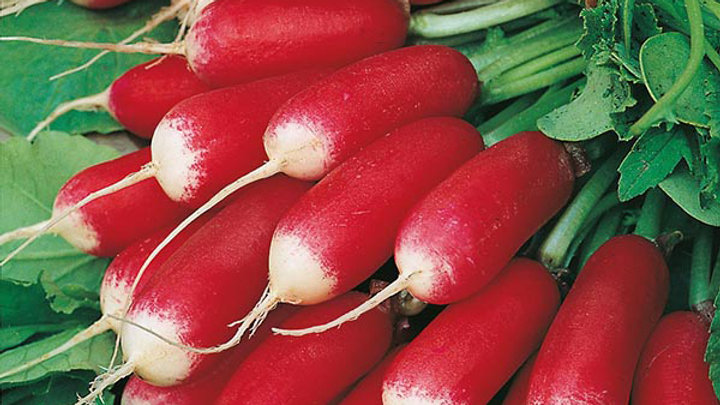 French Breakfast Radish, Bunch