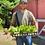 Thumbnail: Turnip, Hakurei/per bunch